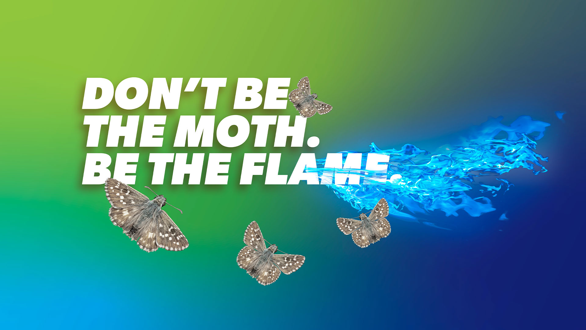 Don't Be the Moth Be the Flame.